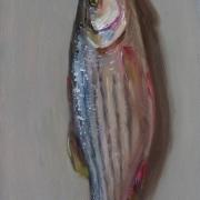 080808a1049-fish