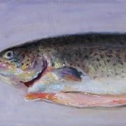 080808a784-salmon-fish