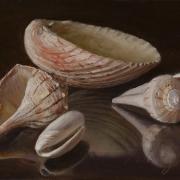 122912-seashells2