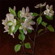 130725-apple-tree-flower