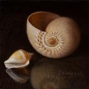 130809-seashells