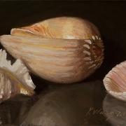 130822-seashells