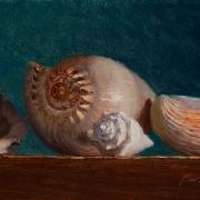 140101-seashells