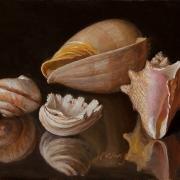140716-seashells