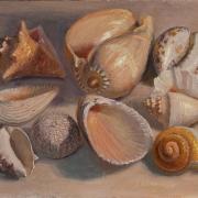 150420-seashells