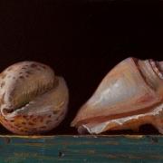 151212-seashells