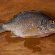 151224-fish