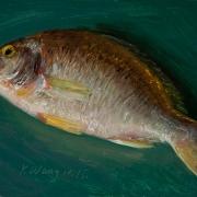 160122-fish