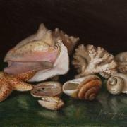 161101-seashell