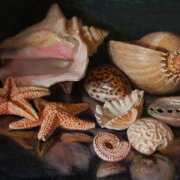 170324-seashells