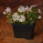 170428-impatiens-flower