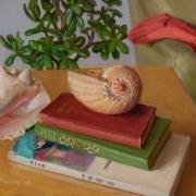 170718-books-seashells