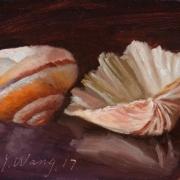 171028-seashell