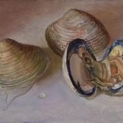 181105-sea-clam-7x5