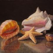 190401-seashells-10x8
