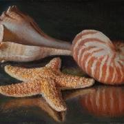 191126-seashells-7x5