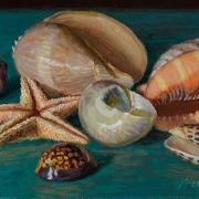 200320-seashells-11.5x7
