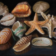 200419-seashells-12x9