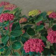 201003-hydrangea-flower-20x16